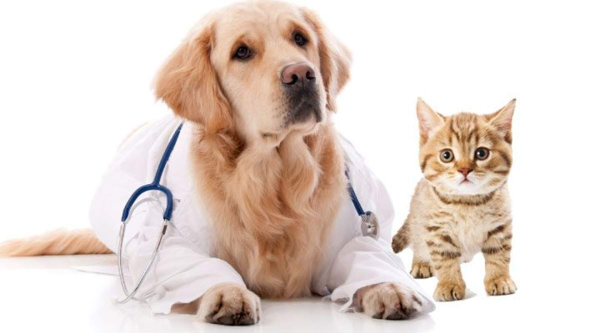 Animal Parasiticides Market report reviews size growth forecasts with global forecasts to 2027 - WhaTech